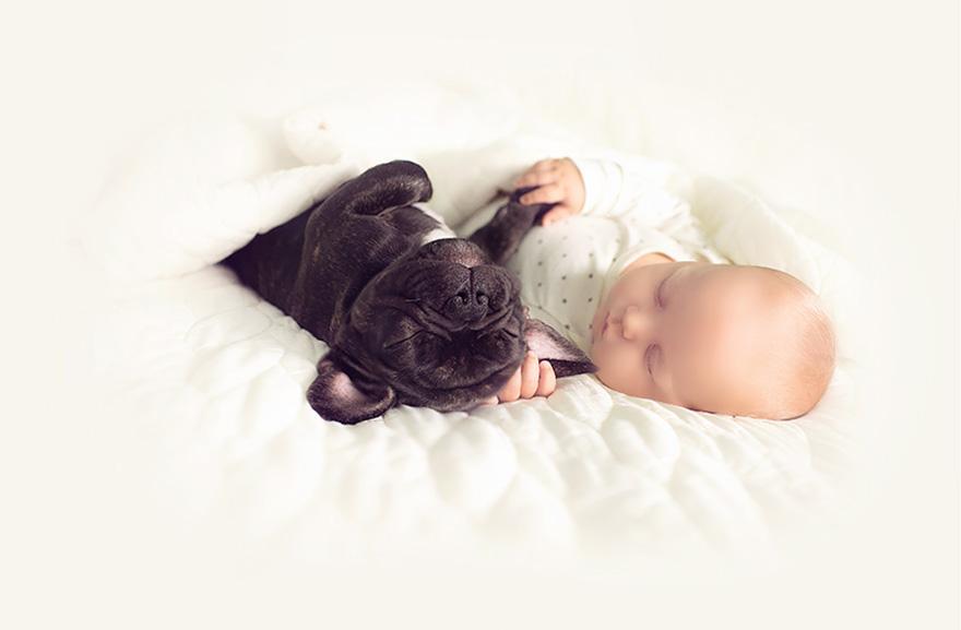 köpek-bebek-sevgisi