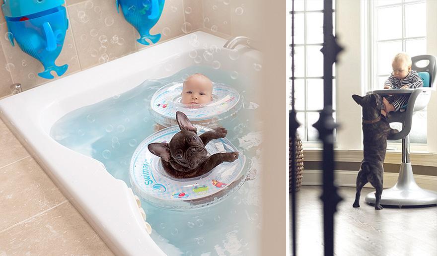 köpek ve bebek havuzda
