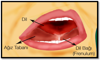 dil bağı