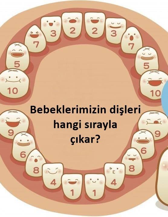 diş çıkarma dönemi