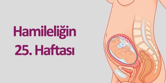 hamileliğin 25.haftası