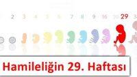 Hamileliğin 29. Haftası