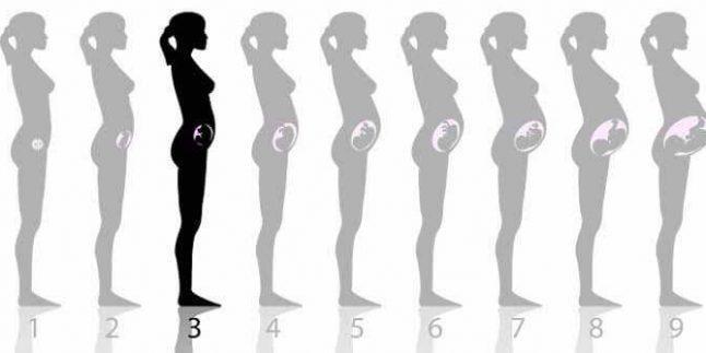hamileliğin 3.haftası